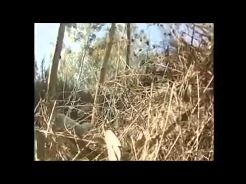 بالفيديو توسل طاقم القناة الإسرائيلية image.php?token=f7d6b0c69cd5f51b89dece081643c106&size=