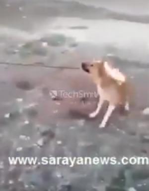 """بالفيديو .. مواطن يشعل النار بكلب صغير.. والامن لـ""""سرايا """": نبحث عنه"""