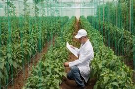 مطلوب مهندسين زراعيين للعمل في كبرى شركات الخليج