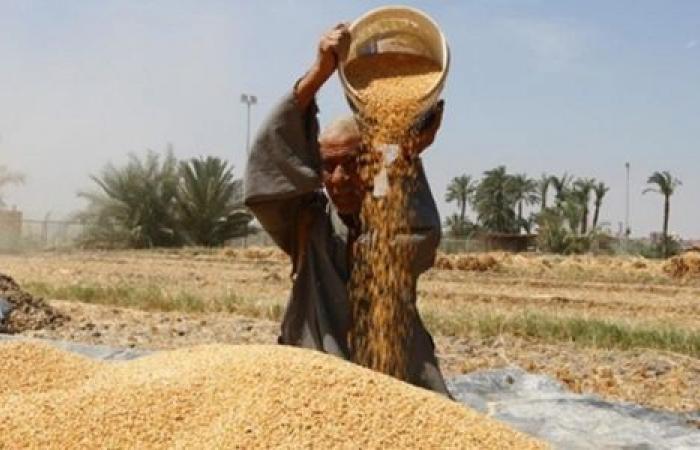 مصر تصدر مناقصة لشراء كمية غير محددة من القمح للشحن في 16-26 أغسطس