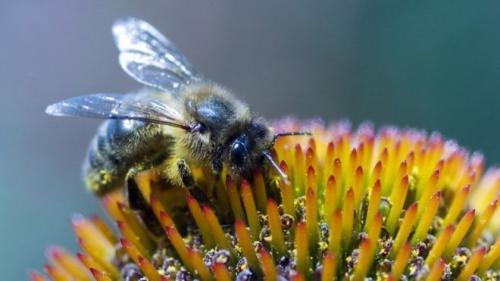وفاة إمرأة في اسبانيا بعد خضوعها لعلاج بلدغ النحل