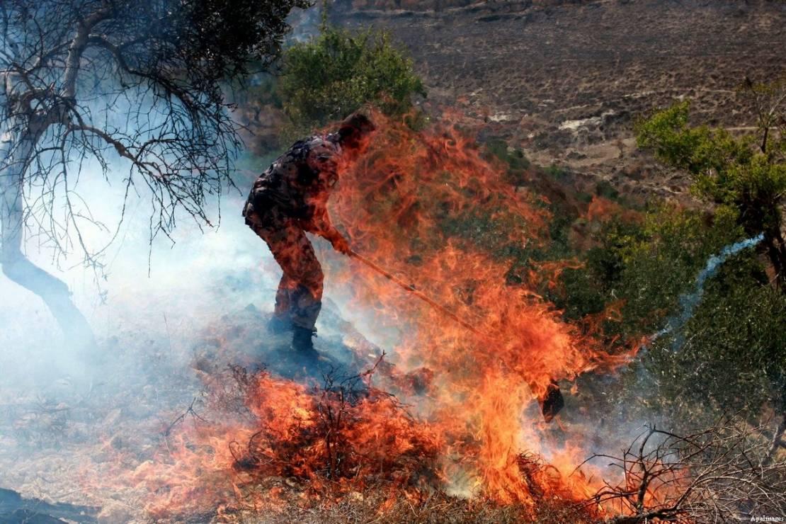 مستوطنون يُشعلون النيران بمئات أشجار الزيتون جنوبي نابلس
