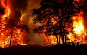 بالفيديو.. لماذا حرائق الغابات هامة ومفيدة ؟