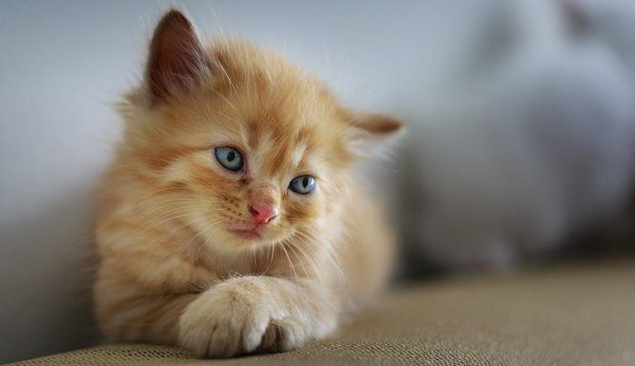 هل رؤية القطة في المنام خير او شر