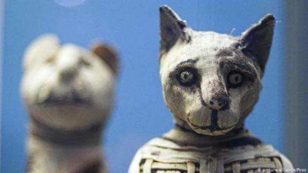 علماء بريطانيون يكشفون محتوى مومياوات حيوانية من مصر القديمة