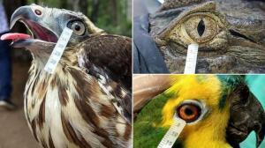 الطيور والزواحف تبكي دموعًا مماثلة للإنسان