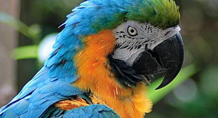 حديقة بريطانية تفرق بين 5 طيور بسبب 'سب الزوار'